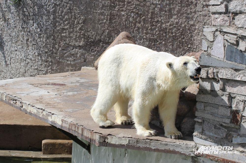 Медведица Услада внимательно следит за своим неугомонным детенышем.