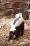 По словам сотрудников зоопарка, у Бони очень спокойный характер.
