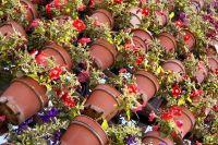 Принять участие в цветочном фестивале могут организации всех форм собственности, индивидуальные предприниматели, садоводы-любители.