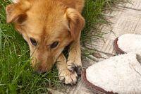 За собаками нужно следить и держать их на привязи.