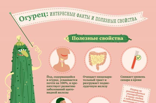 Полезные свойства огурцов для беременных 381