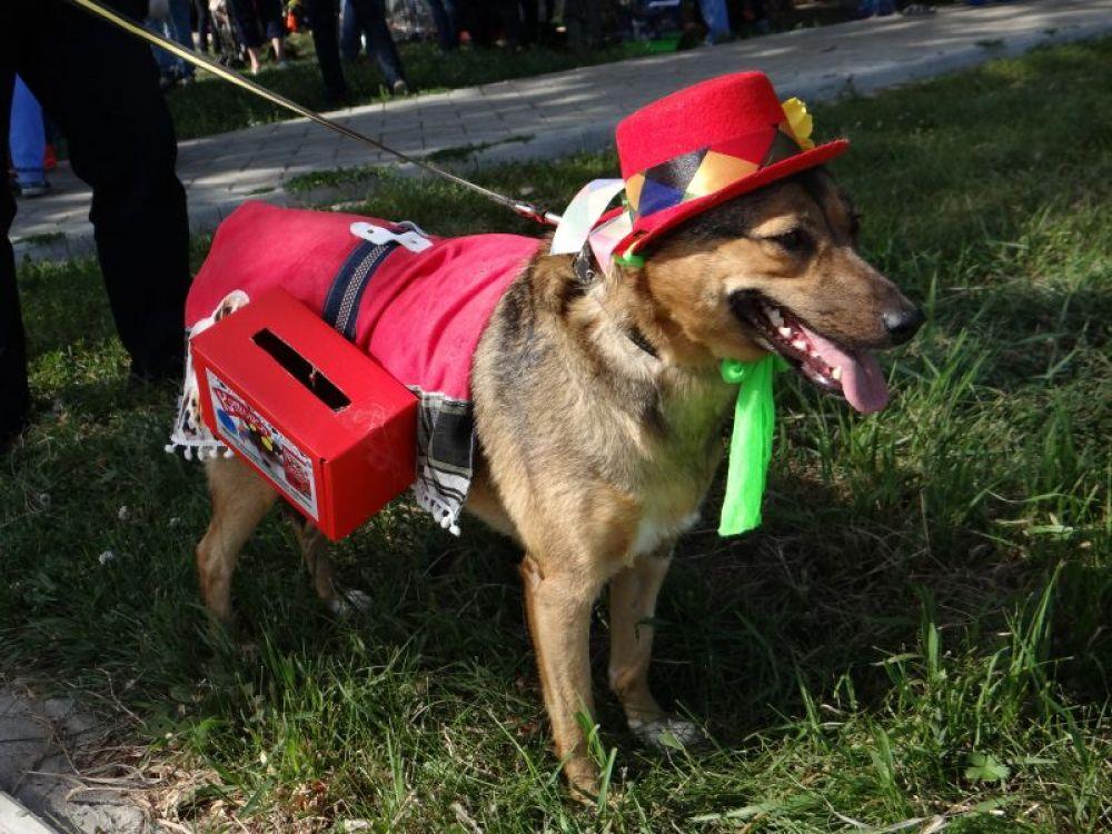 Взрослые собачки в красивых шляпках и с бантиками гуляли, собирая денежки своим собратьям и заодно присматривая себе хозяев