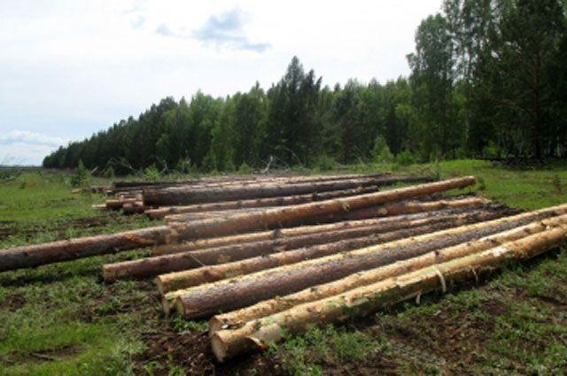 Бригада черных лесорубов спилила более 200 кубометров леса. Д