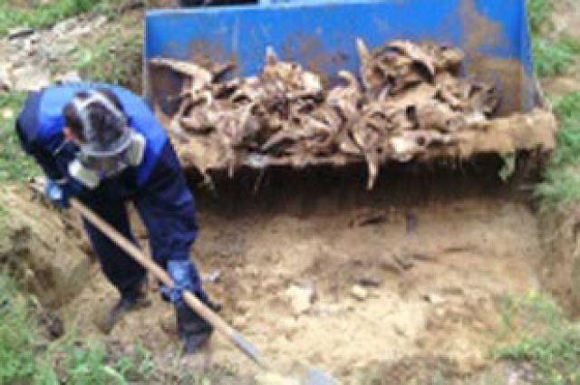 Биологические отходы вывезены за пределы города.