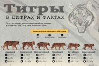 В Приморье амурский тигр подружился с козлом, присланным ему на съедение 46707820ae4c0a05522adc6f5fe29485