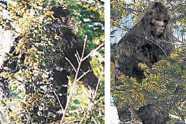 Реконструкция облика снежного человека, выполненная дизайнером Романом Москаликом (справа). Слева - фото существа, сделанное в Кемеровской области.