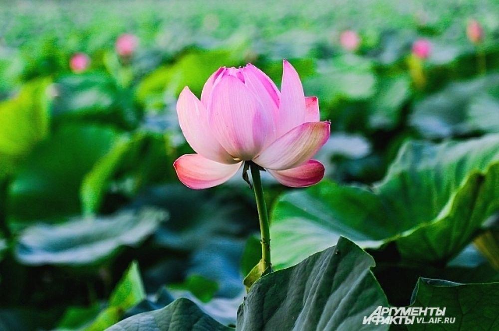 Каждый цветок словно светится изнутри.