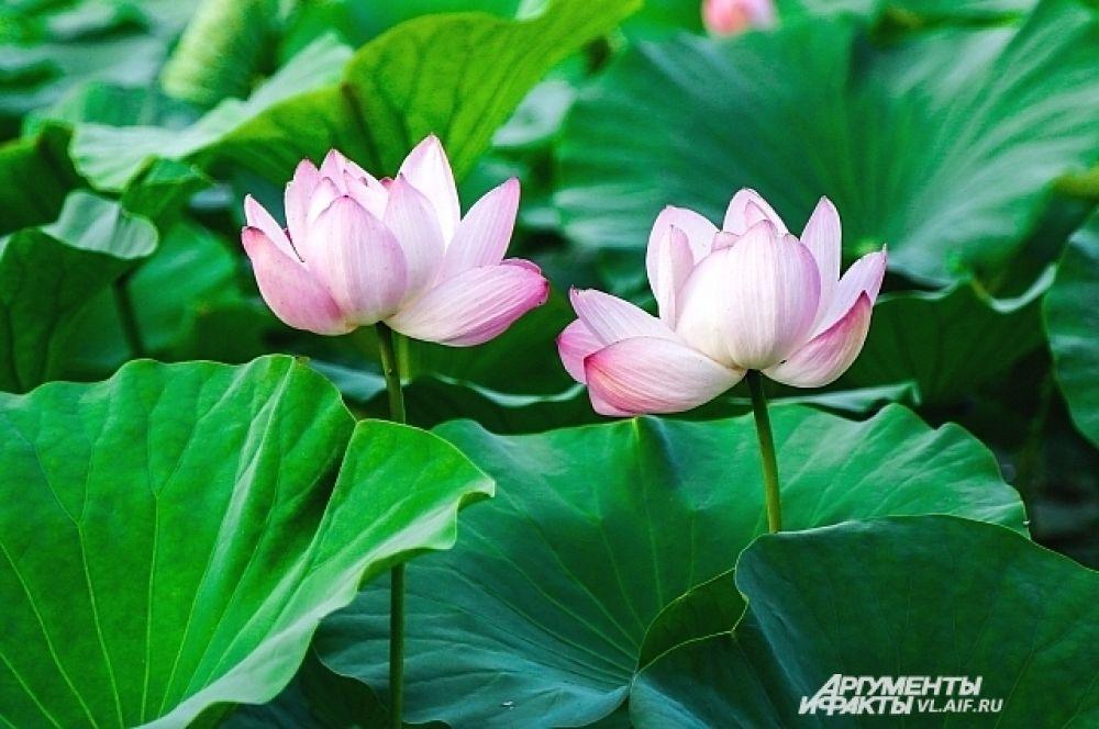 Ну зачем срывать такую красоту? Через час цветок погибнет.