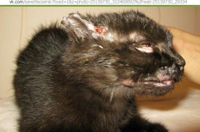 Живодер из Озерска ответит за жестокое обращение с кошками и вандализм