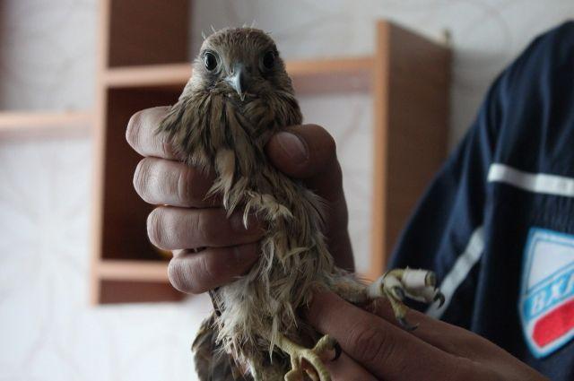 Спортсмены решили, что спасти птицу - их миссия.