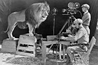Запись львиного рыка для логотипа киностудии Metro-Goldwyn-Mayer, 1929 г.