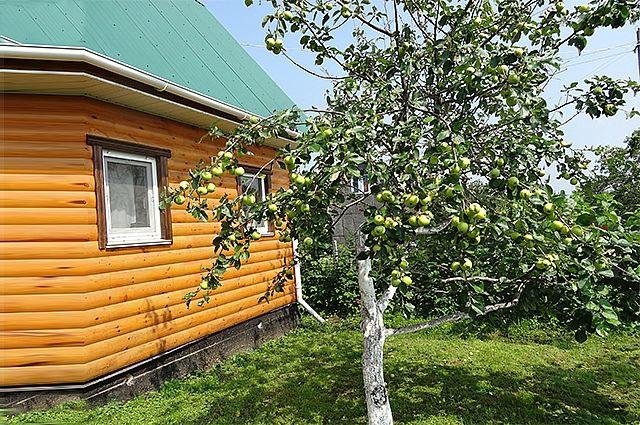 Урожай яблок в этом году оправдал надежды садоводов.