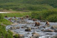 В окружении медведей на реке Камбальной