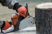 За снос дерева в Иркутске нарушитель наказан материально.
