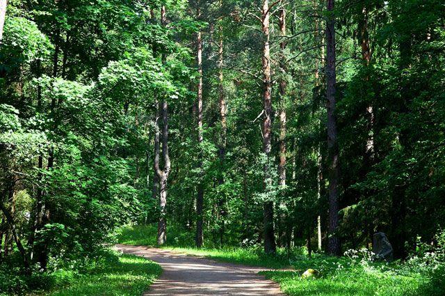 Пожилой мужчина пропал без вести в лесу.