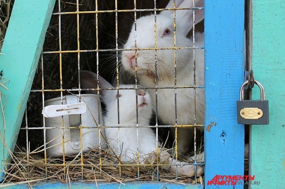 Самые востребованные - кролики, причём разных пород. Есть даже декоративные.