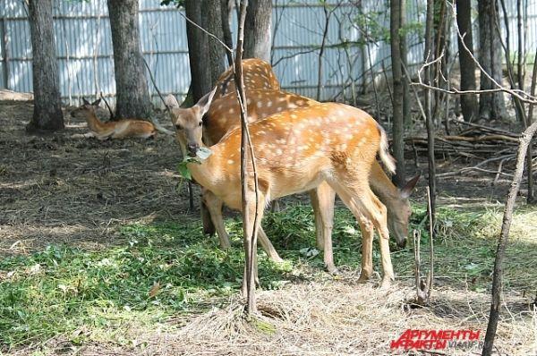 Посмотреть на животных вблизи можно лишь в зоопарке. В лесу - не подпустят так близко.