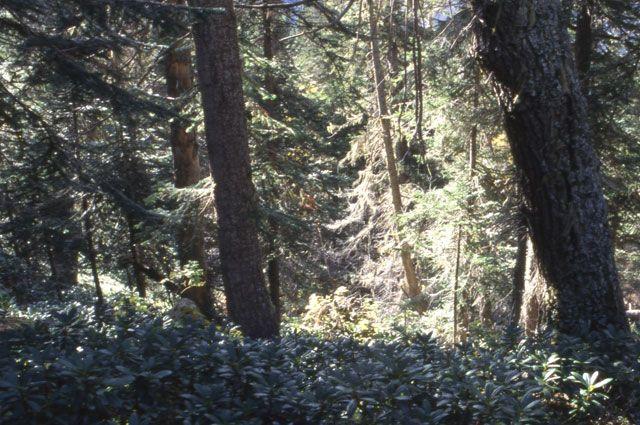 В лесу ищут людей, которые пошли за ягодами и не вернулись.