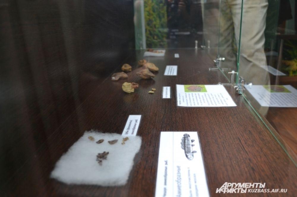 Некоторые экспонаты остались от мелких обитателей древнего моря.