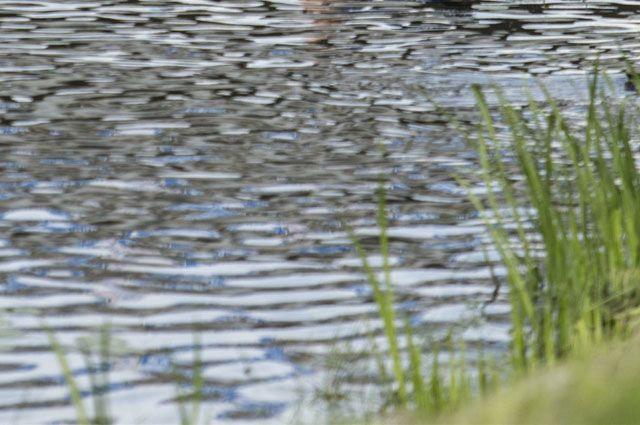 Нерестовая река загрязняется ежедневно.
