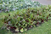 В московском парке им.Горького можно полюбоваться нетолько надекоративную капусту, ноинааппетитную кольраби.