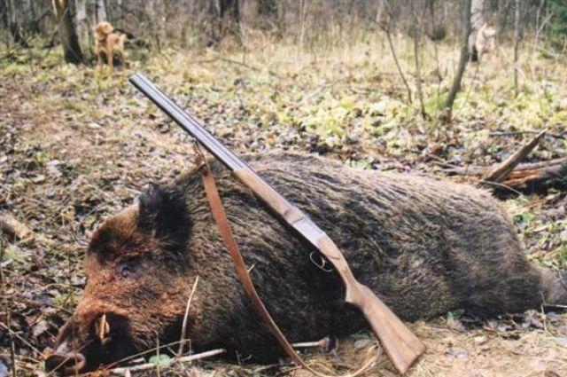 Сезон охоты в Гусь-Хрустальном районе откладывается...