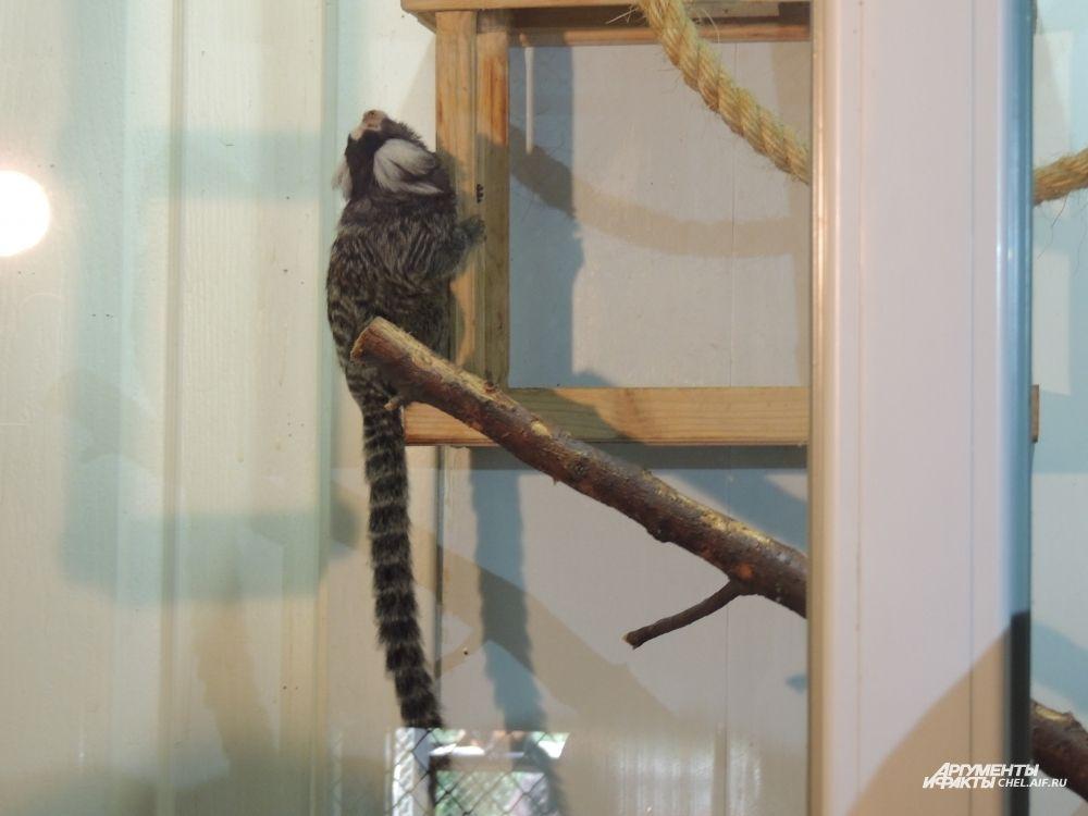 Цаца прибыла из ростовского зоопарка к своему жениху.