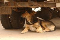 Выжившим собакам пришлось вернуться на улицу.