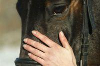 За годы проведения конных состязаний были разыграны призы на общую сумму около 6 млн рублей.