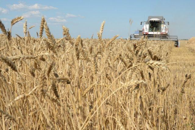 В Омской области начали убирать урожай.