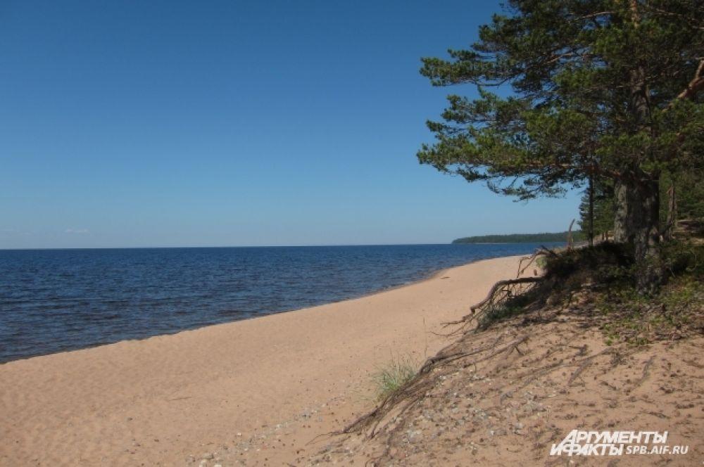 На острове Коневец прекрасные песчаные пляжи.