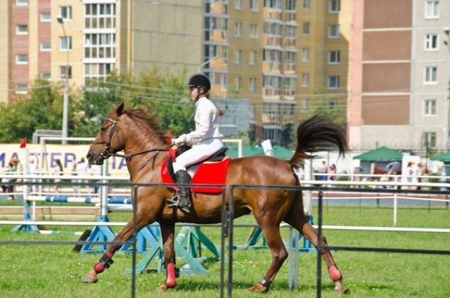Олигарх из Магнитогорска стал самым красивым конем Урала и Сибири