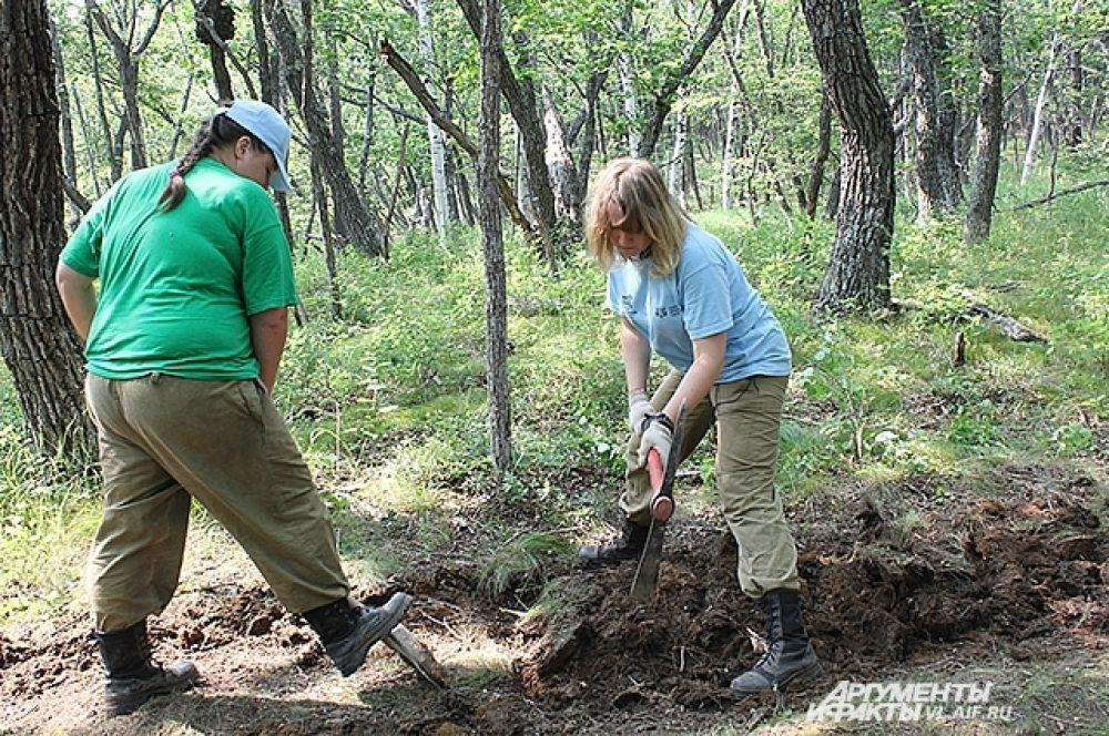 На экотропе сначала снимают верхний слой почвы.