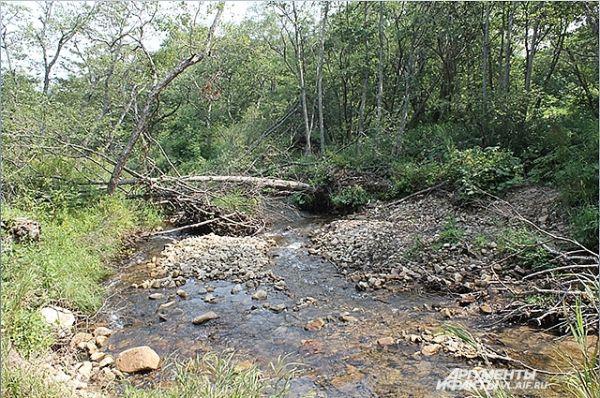 А кругом природная чистота и благодать! Из реки можно пить.