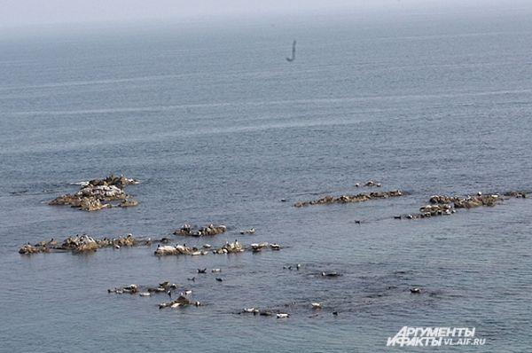 Со смотровой площадки видно лежбище тюленей.