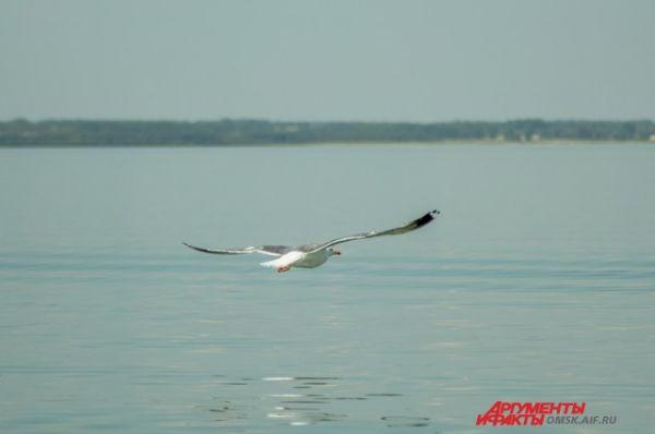 Озеро Гуселетово.