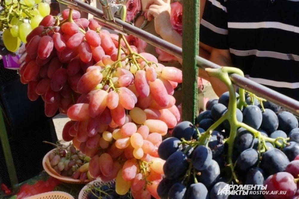 Виноградный калейдоскоп.