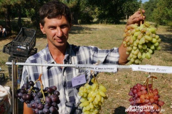 Виноградарь из Новочеркасска Владимир Васильченко: покупайте кишмиши.