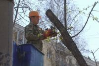 Санитарная обрезка деревьев.