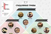Какие грибы съедобные, а какие нет? Ответ в нашей инфографике.