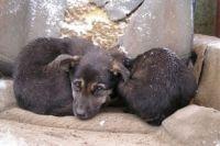 80% домашних животных находятся на «самовыгуле» и штрафов за это не предусмотрено.
