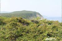 Уссурийская тайга - это чистый воздух не только для Приморья, но и всей страны.