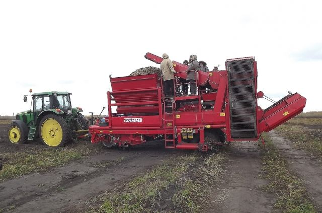 Сбор урожая в Омской области уже начался.