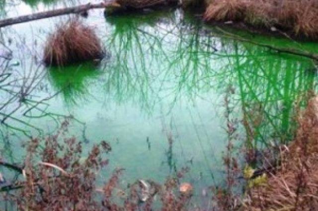 Позеленевшая вода в Ялтинском пруду встревожила горожан.