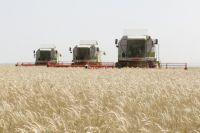 Новосибирские и алтайские сельхозпроизводители едва не застраховались у мошенников.