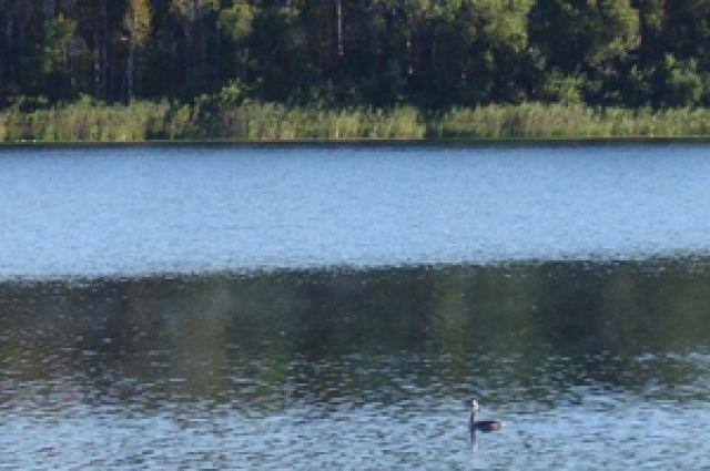 Озеро Ленёво стало природным заказником регионального значения.