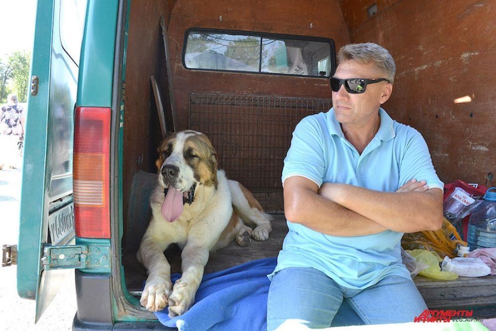 Полуторагодовалый щенок среднеазиатской овчарки внушает уважение, несмотря на свой возраст