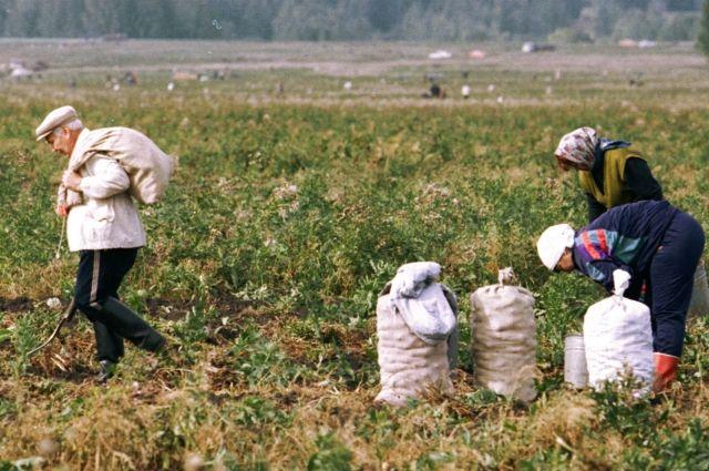 Дмитрий Медведев поставил перед Южным Уралом задачи по развитию агропрома