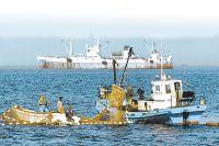 Курильские рыбаки способны компенсировать нам потерю импорта морепродуктов.