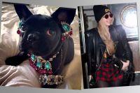 Леди Гага едва не убила свою собаку украшениями.